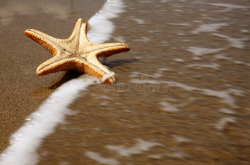 Starfish da praia foto de stock royalty free