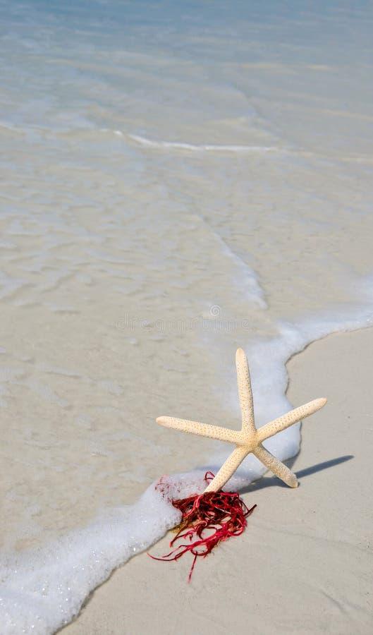 Starfish in der Brandung lizenzfreie stockbilder
