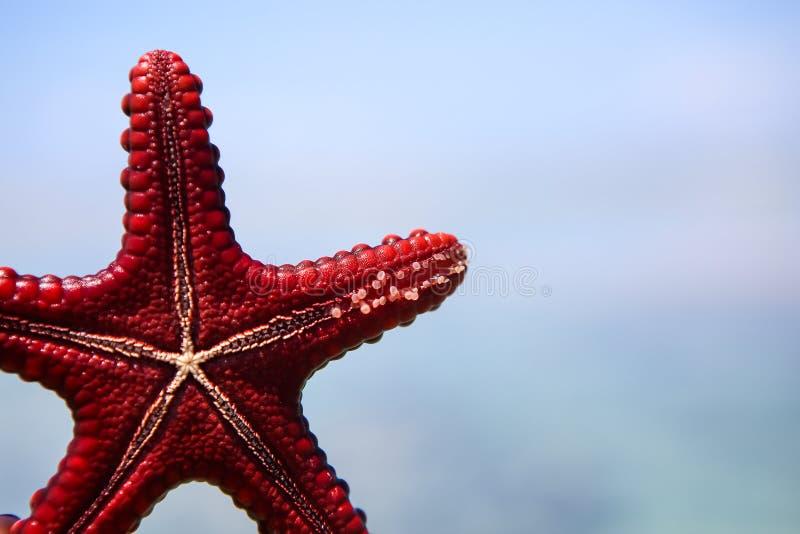 Starfish in der Lagune auf dem südlichen Strand auf dem Ozean marin stockbild