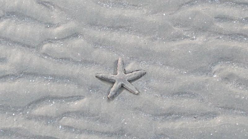 Starfish royalty free stock photography