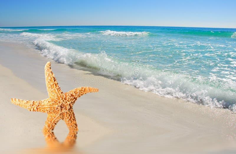 Starfish durch Wellen stockfotos