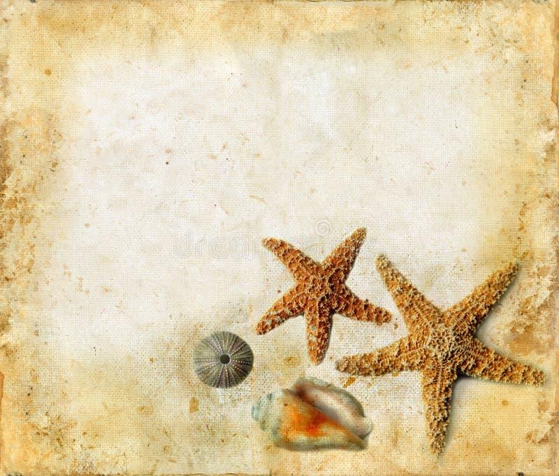 Starfish e escudos em um fundo de Grunge foto de stock