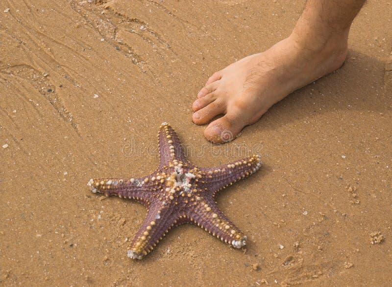 Starfish e pé imagens de stock