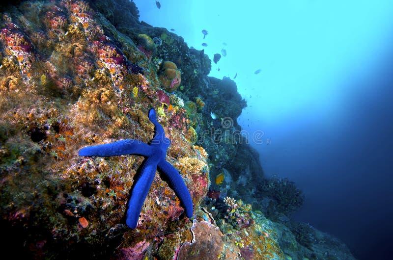 Starfish e recife fotografia de stock royalty free