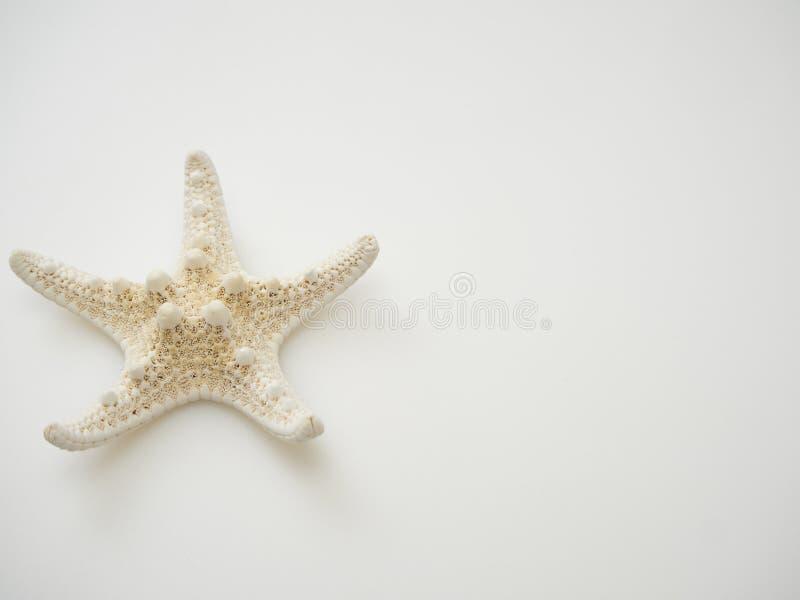 Starfish em um fundo branco fotos de stock
