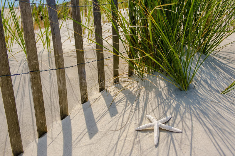 Starfish by the Fence royalty free stock photos