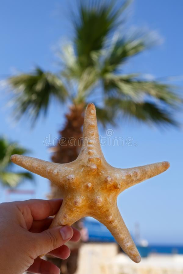 Starfish in hand over tropical beach background stock image