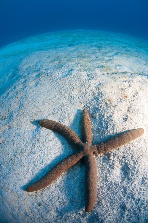 Starfish im Sand stockfotos