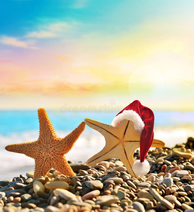Free Starfish In Santa Hat At The Seaside Stock Image - 79633531