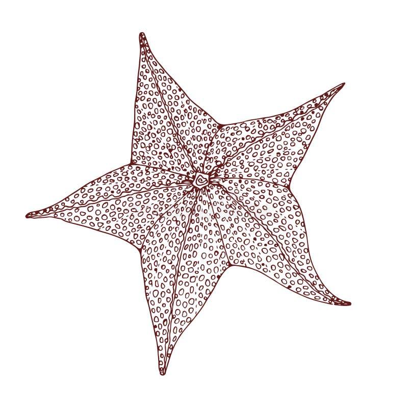 Free Starfish In Zentangle Style Stock Image - 100454651