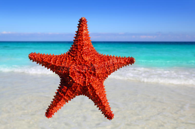 Download Starfish Isolated In A Tropical Turquoise Beach Stock Photo - Image: 20670962