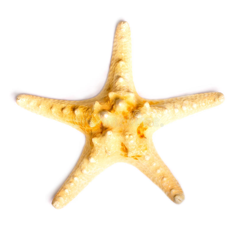 Starfish isolated on white background. See my other works in portfolio stock photos