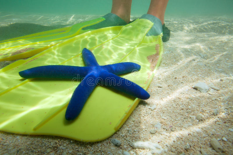 Download Starfish laying on fins stock image. Image of sunlight - 25731265