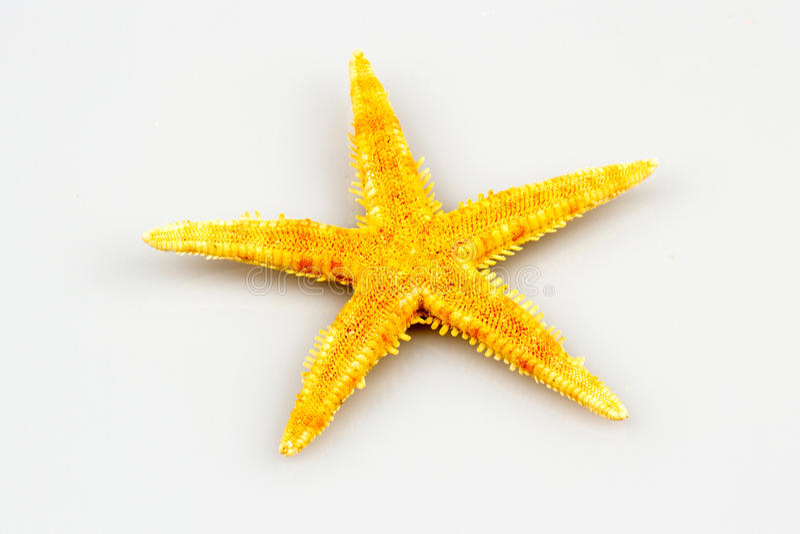 Starfish lokalisiert auf weißem Hintergrund stockfotografie