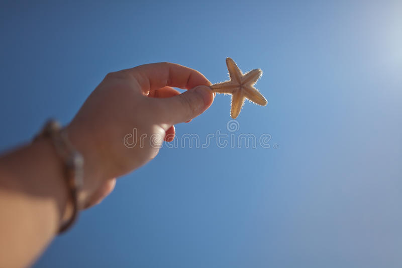 Download Starfish stock image. Image of nature, starfish, beach - 51279851