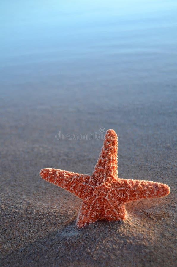 Starfish mit Exemplar-Platz stockbild
