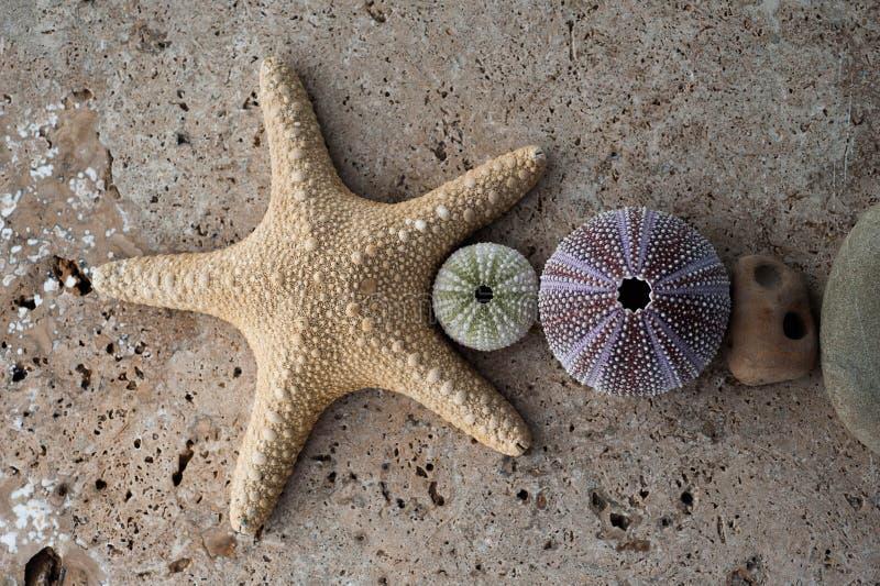 Starfish-Muscheln und Strand-Stein stockfoto
