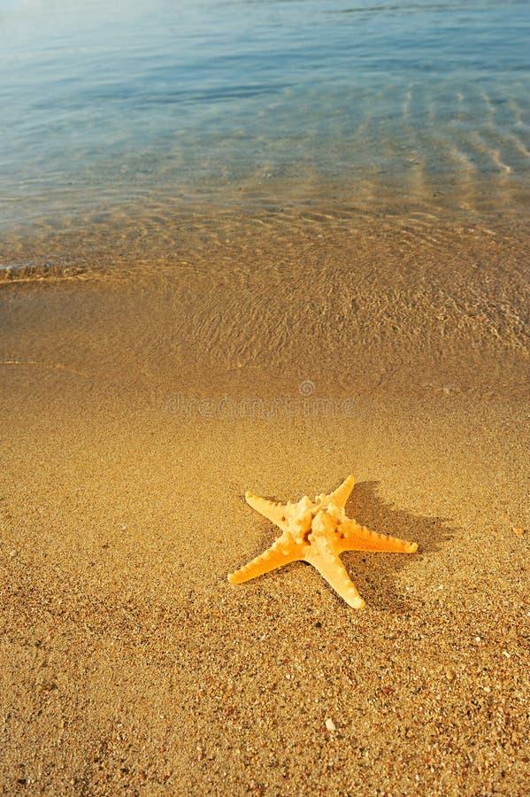 Starfish na areia fotografia de stock royalty free