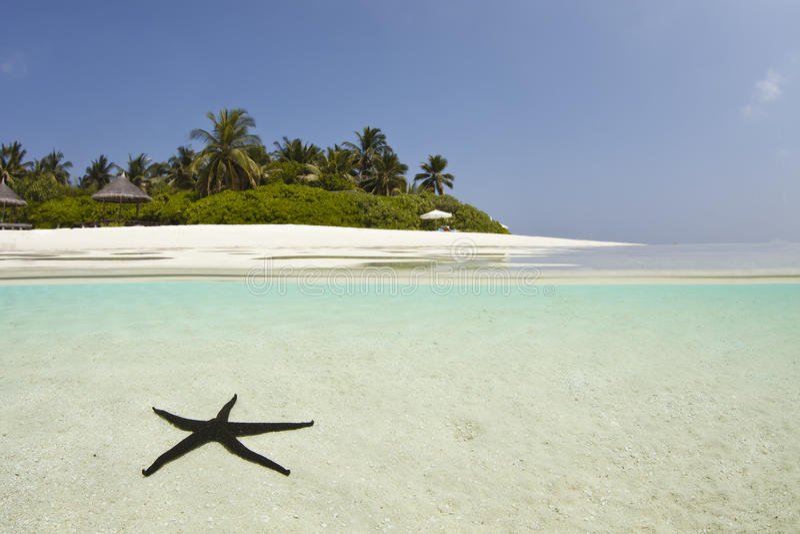 Starfish na lagoa azul imagens de stock royalty free