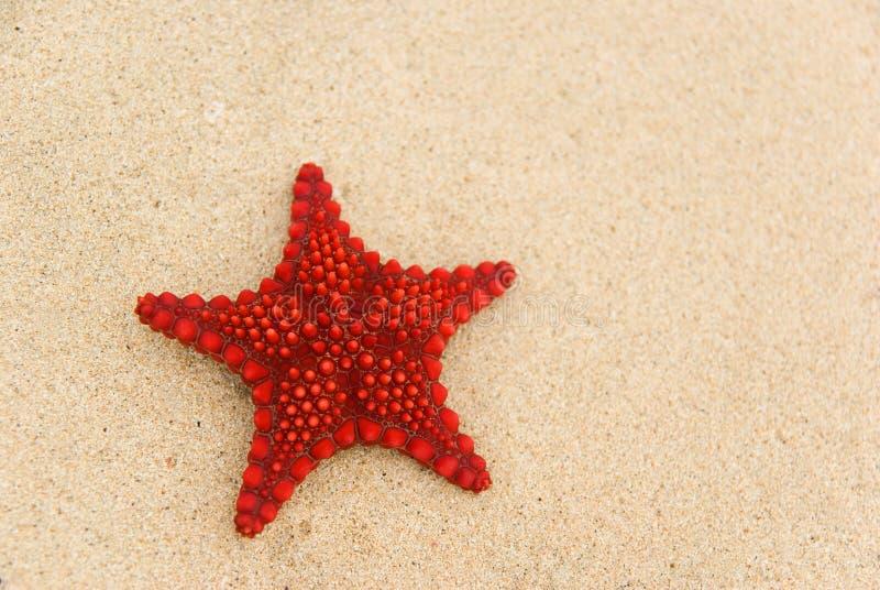 Starfish na praia. fotografia de stock royalty free