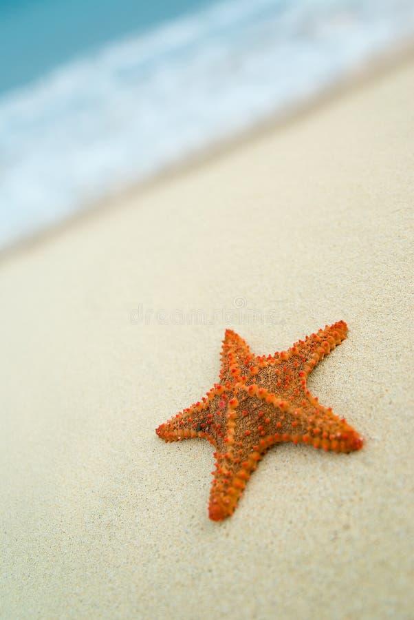 Starfish na praia. imagem de stock royalty free