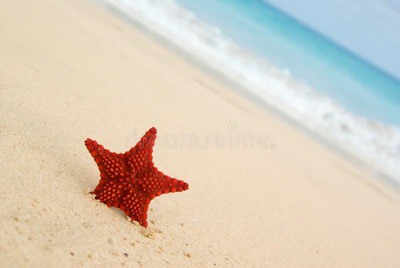 Starfish na praia. foto de stock