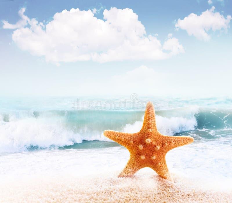 Starfish na praia de Sandy foto de stock