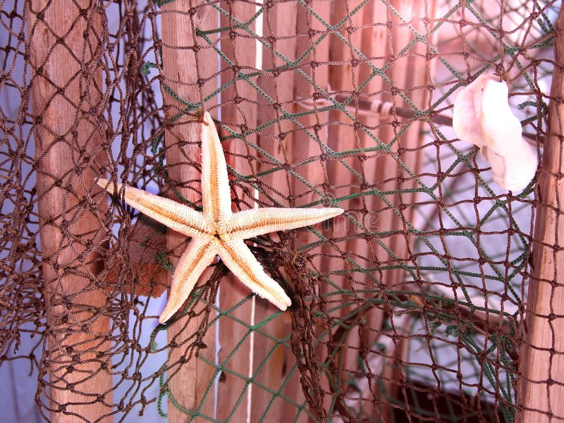Starfish on net stock images