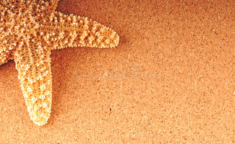 Starfish no fundo tan imagens de stock royalty free