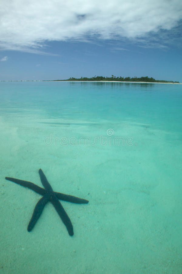 Download Starfish in the Ocean stock photo. Image of simplicity - 17509808