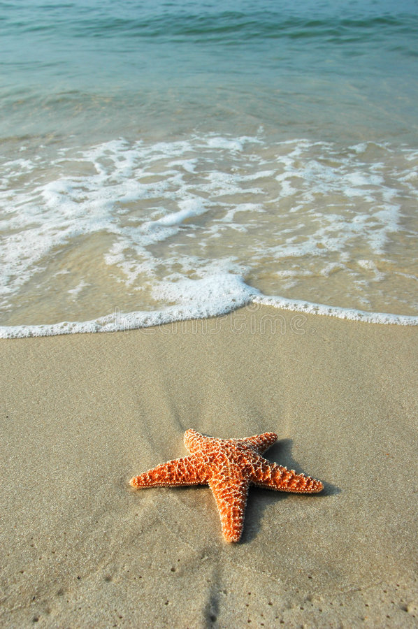 Starfish and the Ocean. Starfish on shore and ocean background