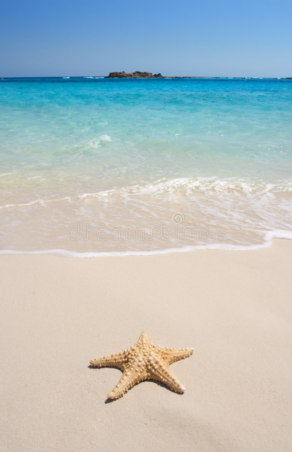 Free Starfish On The Beach Royalty Free Stock Images - 2468519