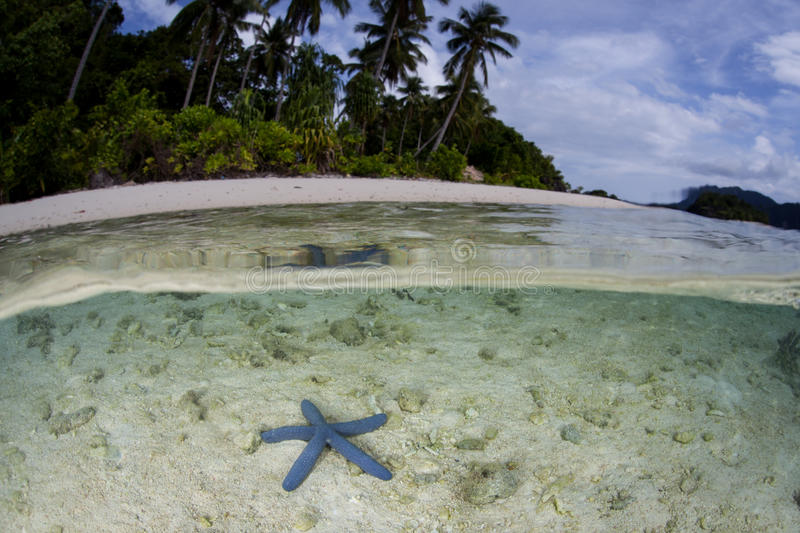 Starfish and Remote Beach in Raja Ampat. A blue starfish lays on the seafloor near a remote beach in Raja Ampat, Indonesia. This remote, tropical region is known royalty free stock photos