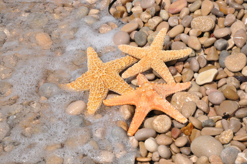 Starfish on rocky beach stock image