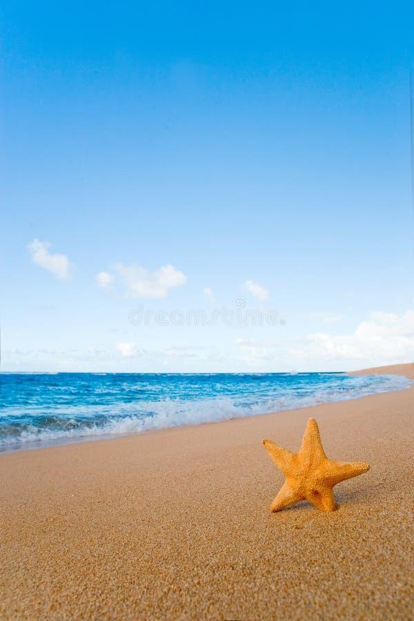 Starfish-Sand stockfoto