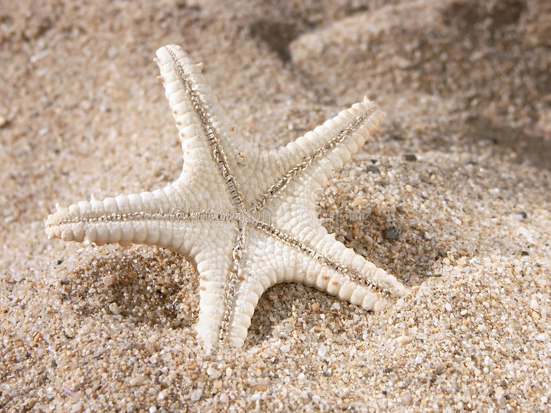 Starfish on sand royalty free stock images