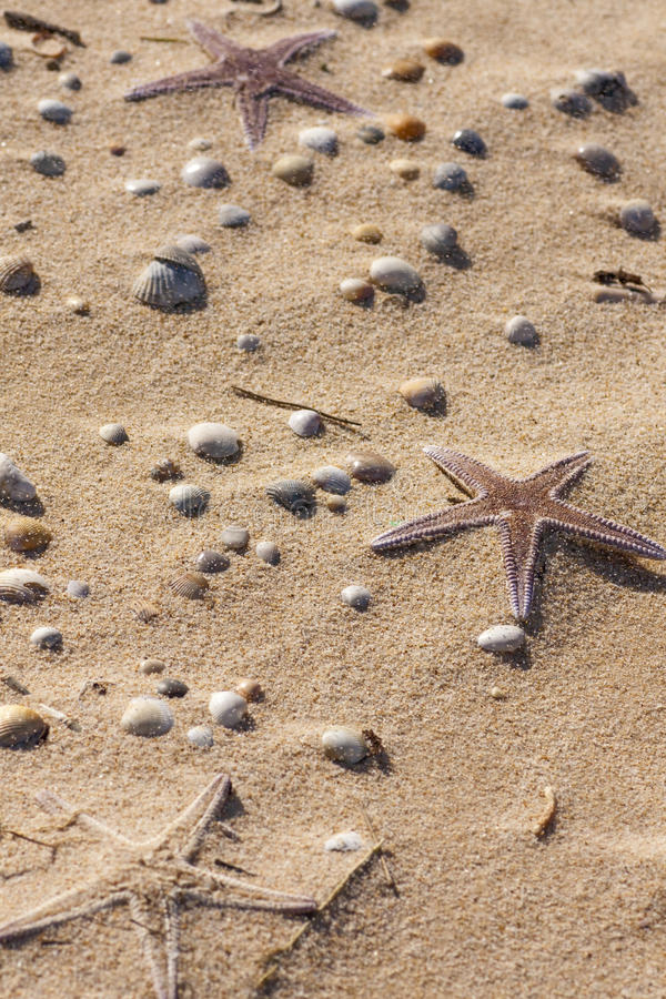 Download Starfish on the sand stock photo. Image of outside, buried - 14307392