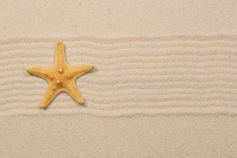 Starfish on Sand royalty free stock photo