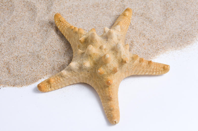 Download Starfish in the sand stock image. Image of relaxation - 21524059