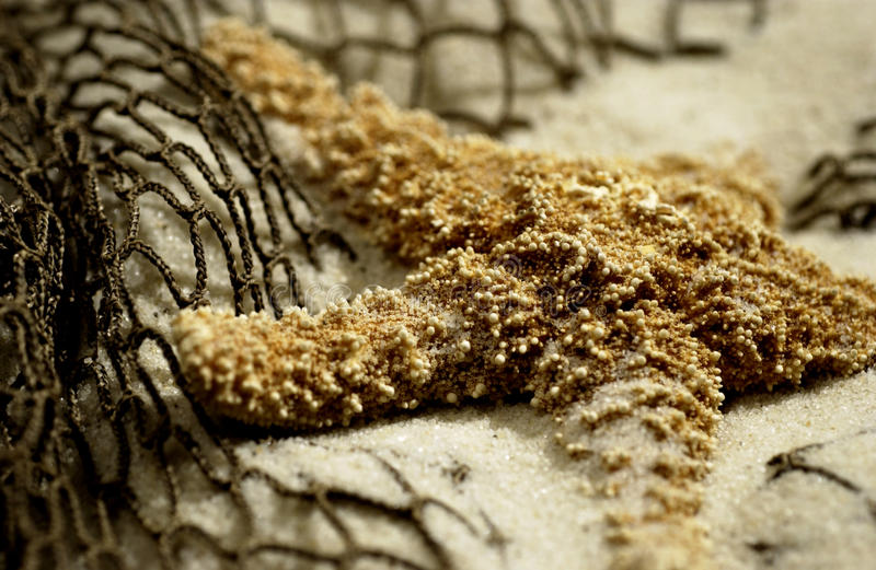 Download Starfish in the sand stock photo. Image of caribbean - 22983218