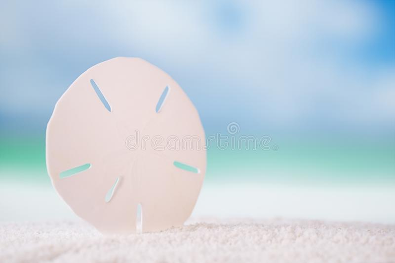Starfish sand dollar on white ocean beach. With seascape background royalty free stock photo