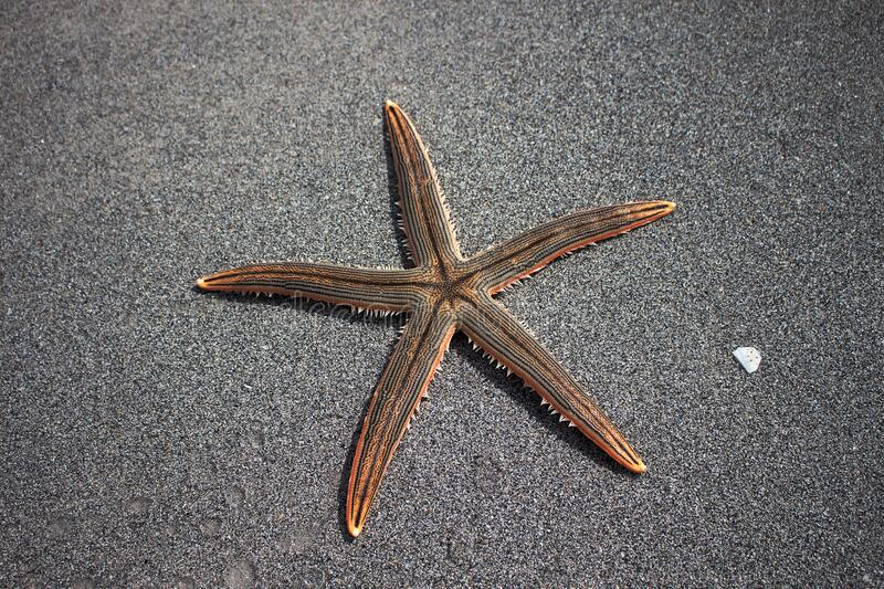 Starfish On Sandy Beach Free Public Domain Cc0 Image