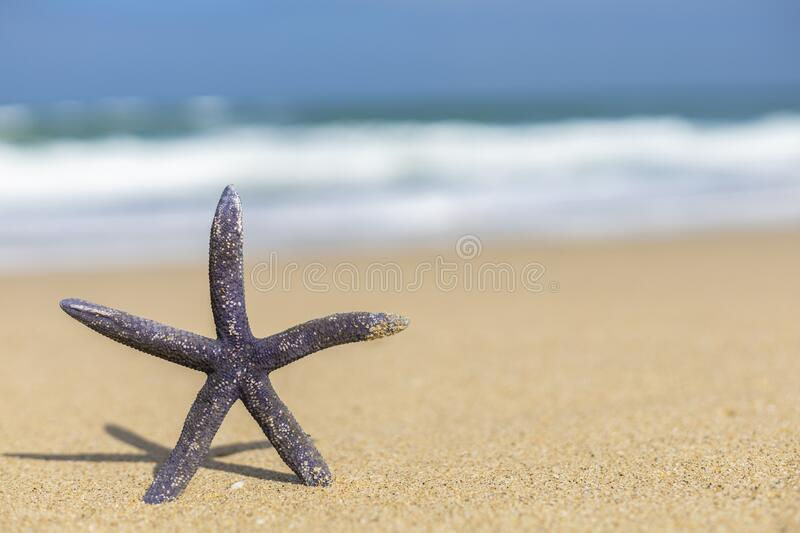 A starfish on a sandy beach. Image of a starfish on a sandy beach in the sunlight for backgrounds stock photo