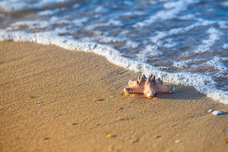 Starfish on a sandy beach and sea as vacation symbol stock photography