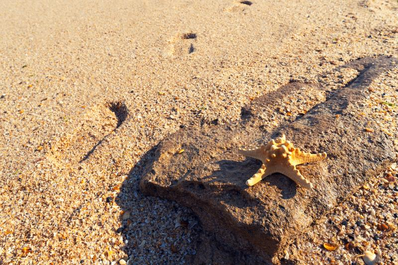 Starfish on sandy shore. Starfish on the sandy shore royalty free stock image
