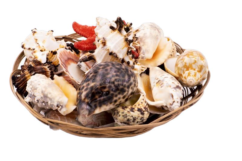 Starfish and sea shells in a wicker basket stock image