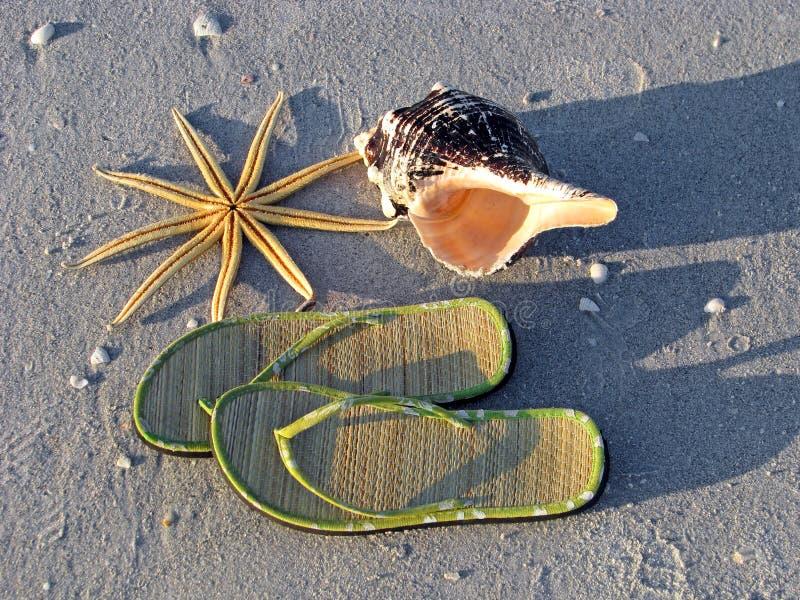 starfish seashell сандалий пляжа стоковая фотография