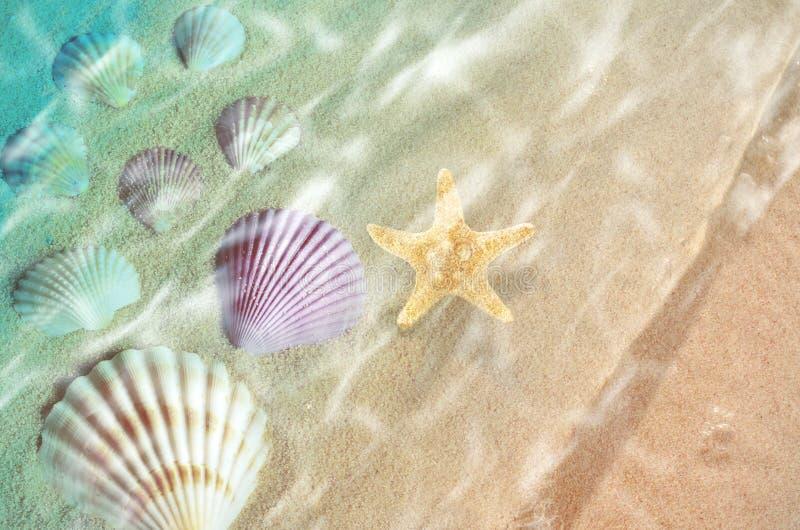 Starfish and seashell on the summer beach in sea water. stock photo