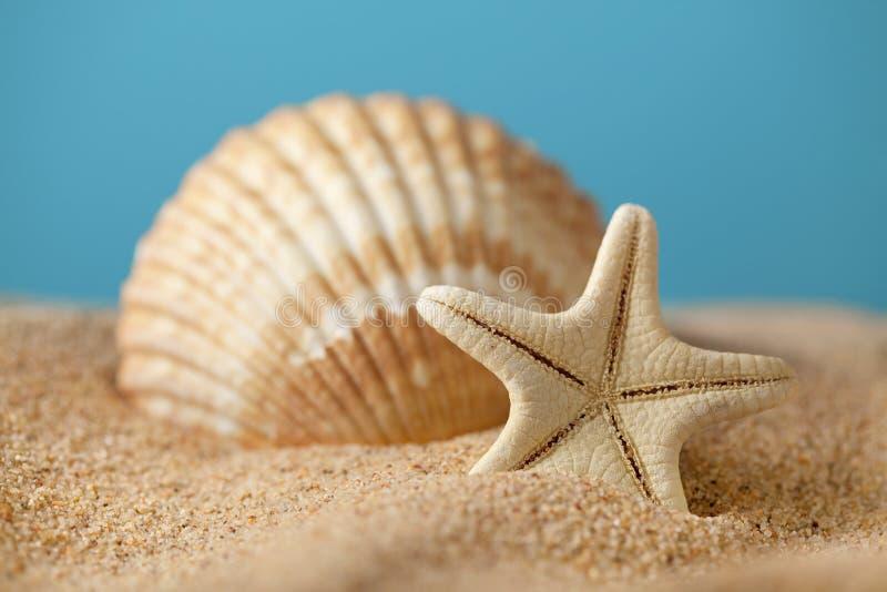 Starfish and seashells on beach stock images
