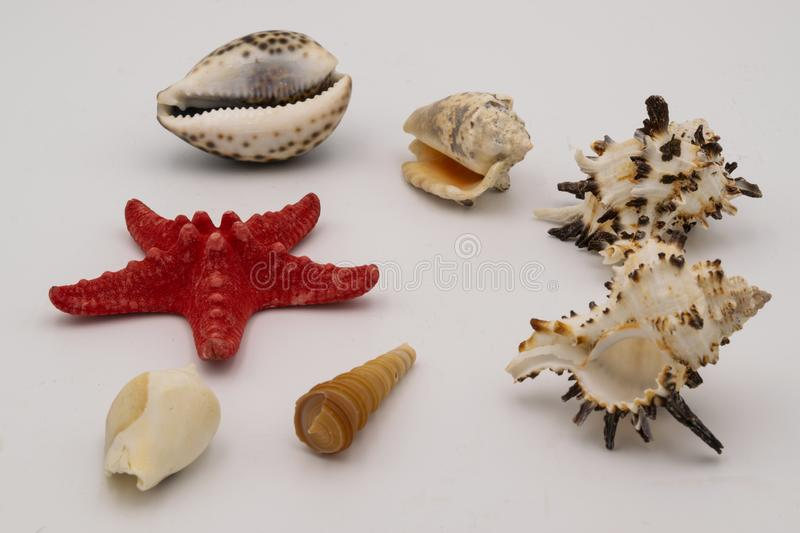 Starfish and seashells on the white table stock photography